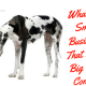 Storytelling: What do small businesses that became big have in common?